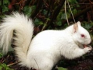 "British Town's ""Diana"" Style Funeral for Their Beloved Albino Squirrel"