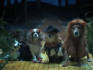 VIDEO: The Wizard of Dogz