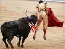 Spainish Scientists Clone a Fighting Bull