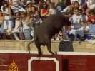 VIDEO: Rampaging Bull Injures 40