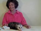 Opossum Pedicure