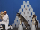 VIDEO: OK Go Gets Some Help From Man's Best Friend