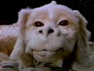 VIDEO: The NeverEnding Story Inspires Trans Men to Call Themselves Sebastian or Bastian