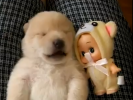 VIDEO: Puppy Nightmare