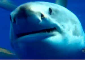 """VIDEO: Shark Week Uses Lady Gaga's """"Show Me Your Teeth"""" for Promo"""