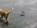 VIDEO: Bird Trolls Cat