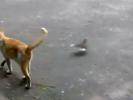 VIDEO: Bird Trolls Cat