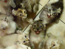 Insane, Hungry Cats