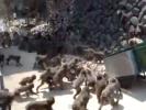 VIDEO: Monkey Feeding Frenzy