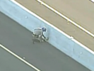 VIDEO: Amazing Highway Puppy Rescue