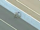 VIDEO: Amazing Highway Puppy Rescue