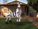 VIDEO: The Dancing Zebra and Some Killer Music