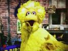 VIDEO: Obama's Big Bird Ad