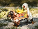 PHOTO: Adorable Daschund Dressed like Two Monkeys Carrying a Box of Bannanas