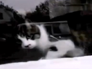 VIDEO: Mailman Battles Angry Cat