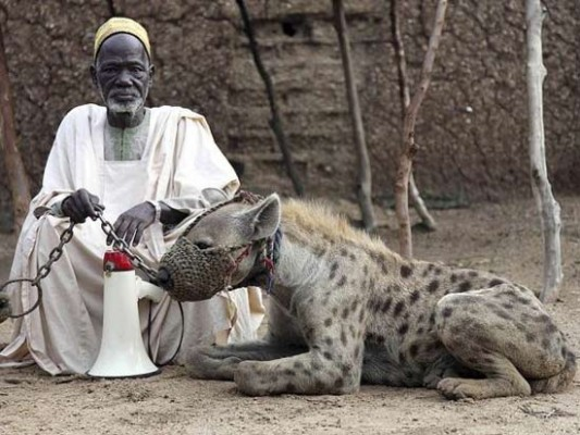 Never take financial advice from a guy with a hyena for a pet.